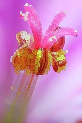 Microscopy Photograph - Herb Robert Flower by Karl Gaff