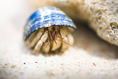 Occupy Photograph - Hiding Hermit Crab by Jorgo Photography - Wall Art Gallery