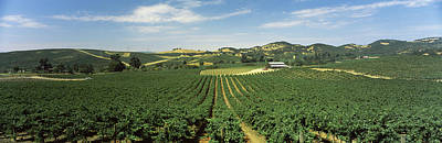 Vineyard In Napa Photograph - High Angle View Of A Vineyard, Carneros by Panoramic Images