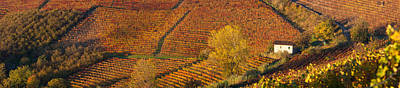 Viniculture Photograph - High Angle View Of Vineyards, Alba by Panoramic Images