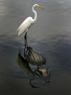 Alligator Bayou Photograph - Hitch Hiker by Anthony Jones