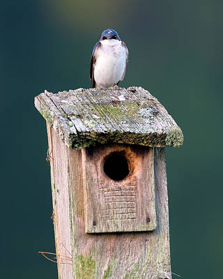 Swallow Photograph - Home Sweet Home by Bill Wakeley