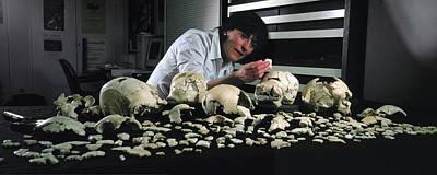 Hominin Skulls From Sima De Los Huesos Print by Javier Trueba/msf