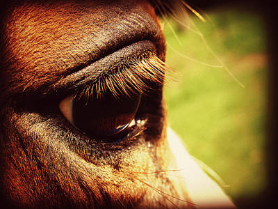 Horse Photograph - Horse Eye by Cassie Peters