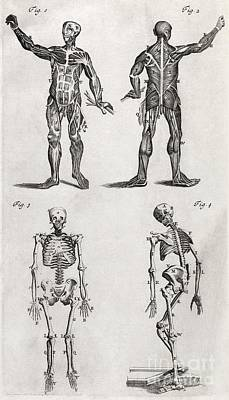 Human Anatomy, 18th Century Artwork Print by Middle Temple Library
