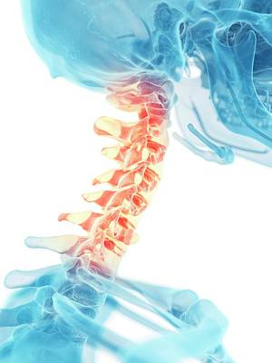 Human Bones Photograph - Human Neck Bones by Sciepro