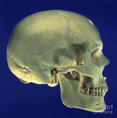 Human Skeleton Photograph - Human Skull by David Bassett