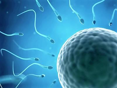 Fertilization Photograph - Human Sperm And Egg by Sebastian Kaulitzki