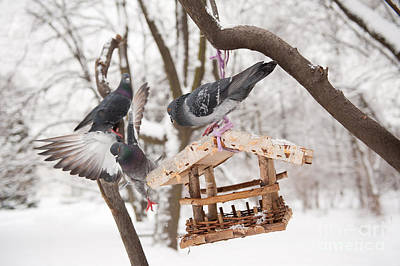 Three Hungry Pigeons Sitting On Bird Feeder  Print by Arletta Cwalina