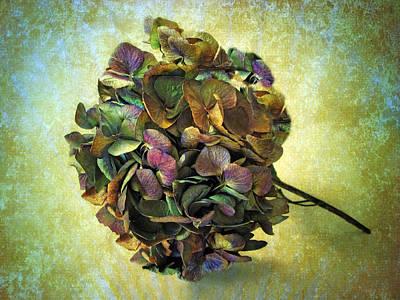 Hydrangea Still Life Print by Jessica Jenney