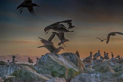 Birds In Flight Photograph - In Flight by Bill Roberts