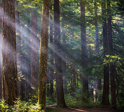 Fir Trees Photograph - In The Forest by Angie Vogel