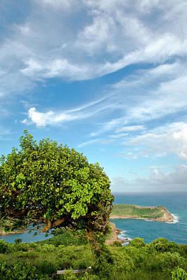 Indian Creek Point, Antigua, West Print by Nico Tondini