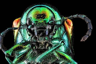 Hemp Photograph - Indian Hemp Beetle by Us Geological Survey
