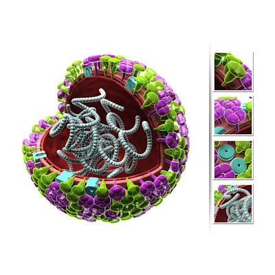 Influenza Virus Structure Print by Harvinder Singh