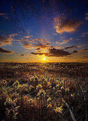 Fall Leaves Photograph - Interlude by Phil Koch