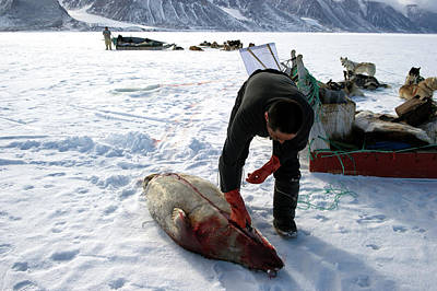 Inuit Hunter Butchering A Seal Print by Louise Murray