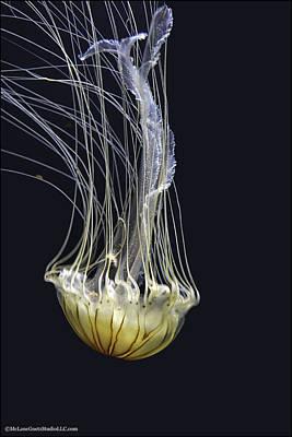 Salt Photograph - Jellyfish Of Aquarium Of The Bay San Francisco by LeeAnn McLaneGoetz McLaneGoetzStudioLLCcom