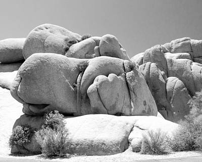 Black And White Photograph - Joshua Tree 25 by Alex Snay