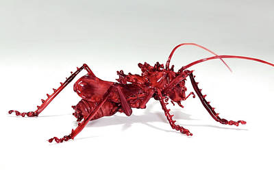 Glass Blowing Photograph - Katydid by Tomasz Litwin