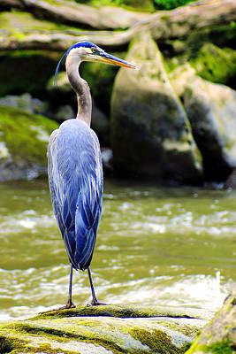 Blue Herron Photograph - Keeping Watch by Michelle Joseph-Long