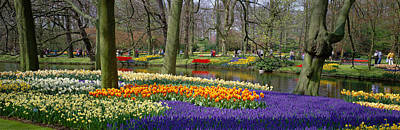 Tulips Photograph - Keukenhof Garden Lisse The Netherlands by Panoramic Images