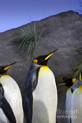 Antartica Photograph - King Penguins by Brandon Alms