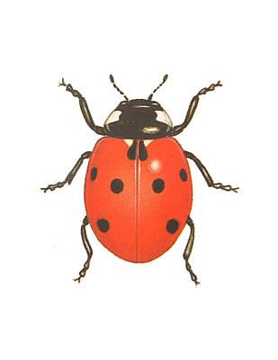 Antennae Drawing - Ladybug by Pati Photography