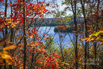 Lake And Fall Forest Print by Elena Elisseeva