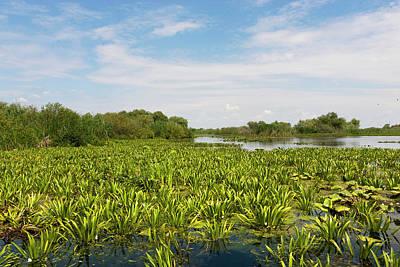 Romania Photograph - Lake In The Danube Delta, Romania by Martin Zwick