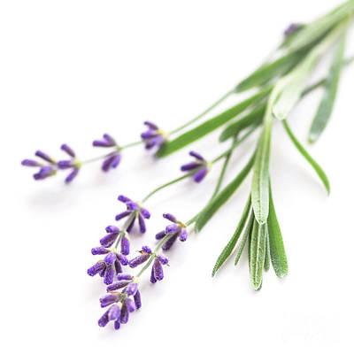 Lavender Print by Elena Elisseeva