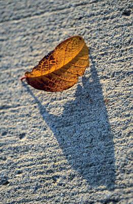 Igor Baranov Photograph - Leaf by Igor Baranov