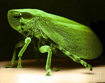 Leafhopper Sem Print by David M Phillips