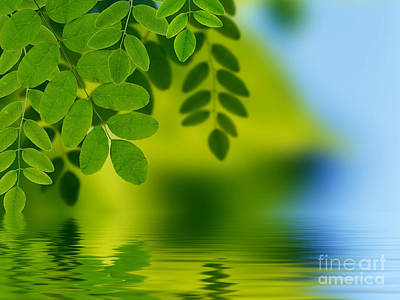 Background Drawing - Leaves Reflecting In Water by Aged Pixel