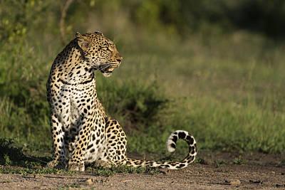 Leopard Sabi-sands Game Reserve South Print by Sergey Gorshkov