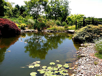 Solebury Photograph - Lily Pond At Paxson Hill by Addie Hocynec