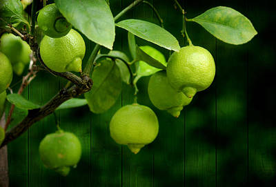 Lemon Mixed Media - Limette by Heike Hultsch