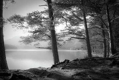 Tree Roots Photograph - Loch An Eilein by Dorit Fuhg