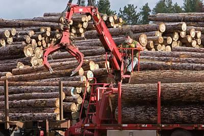 Logs At A Sawmill Print by Jim West