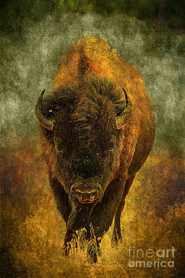 Tough Photograph - Lone Buffalo by Cindy Singleton