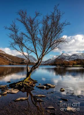 Llanberis Photograph - Lone Tree by Adrian Evans