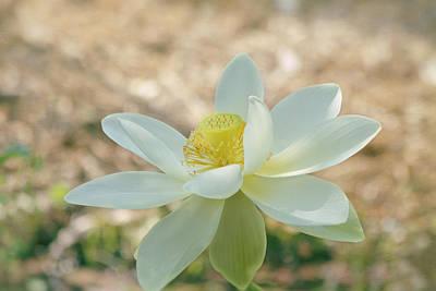 Lotus Flower Print by Kim Hojnacki