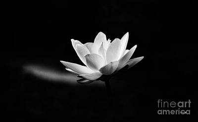 Lightscapes Photograph - Lotus by Scott Pellegrin