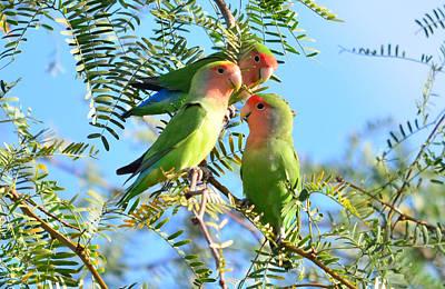 Lovebirds Original by Eduardo  Dinero