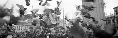 Low Angle View Of A Flock Of Pigeons Print by Panoramic Images