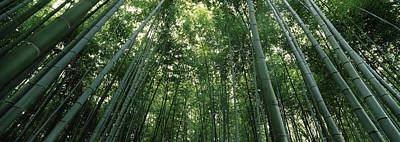 Honshu Photograph - Low Angle View Of Bamboo Trees by Panoramic Images