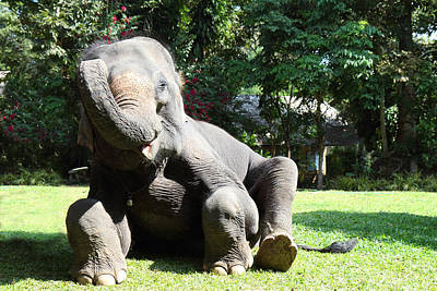 Thailand Photograph - Maesa Elephant Camp - Chiang Mai Thailand - 01131 by DC Photographer