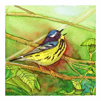 Magnolia Warbler Print by Dave Whited