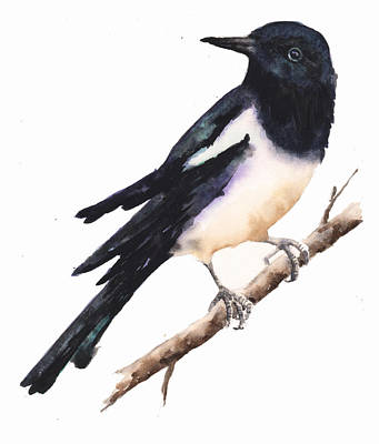 Magpie Painting Print by Alison Fennell