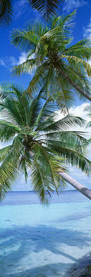 Palm Fronds Photograph - Maldives by Panoramic Images